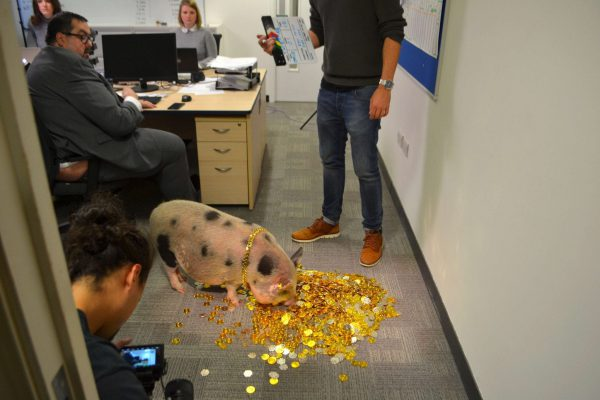hire pigs for film and tv uk