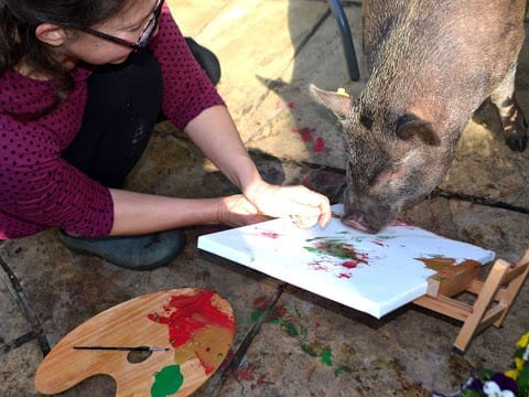 connie the micro pig painting a canvas
