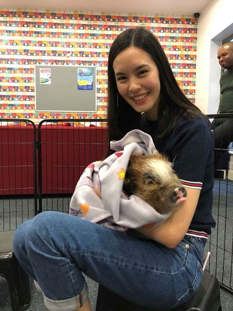 micro pig therapy for students