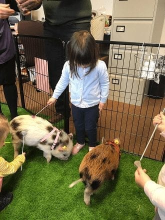 micro pigs for nurseries