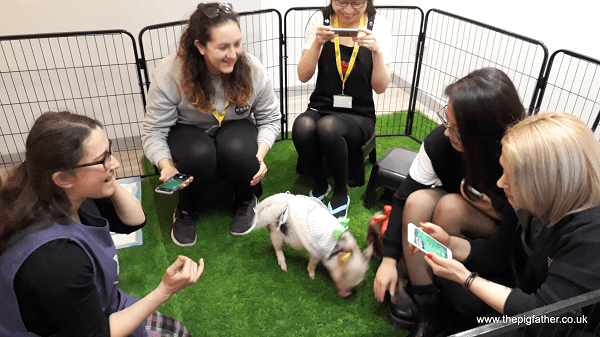 therapy pigs in london