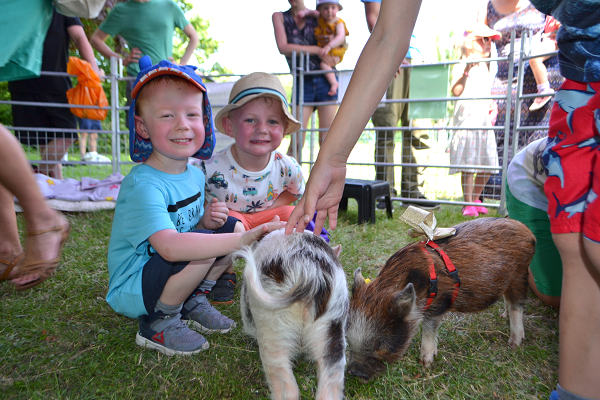 micro pigs for schools and nurseries