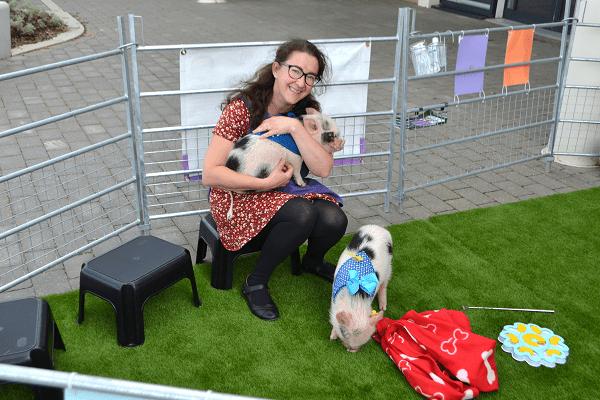 miniature pigs at Queen's Gate School Super Saturday 14th March 2020
