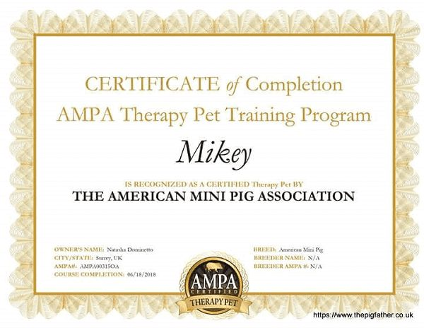 ampa certified therapy pig mikey