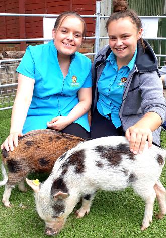 micro pig visit to a nursery