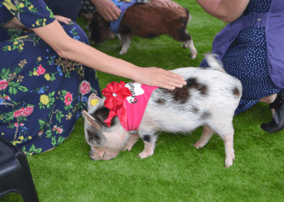 Mini Pig Polly at Victoria and Albert Museum in london