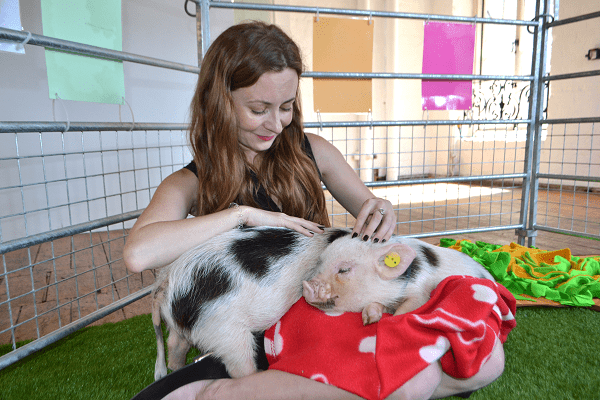 do micro pigs make good pets