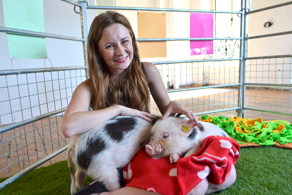 uk micro pigs being cuddled at an office in london