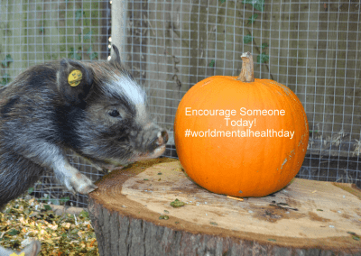 holly the ginger micro pig with a pumpkin in london