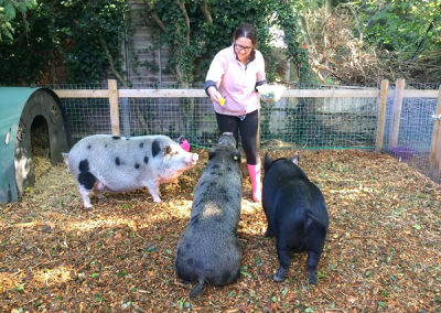 connie the miniature pig demonstrating a sit command in london