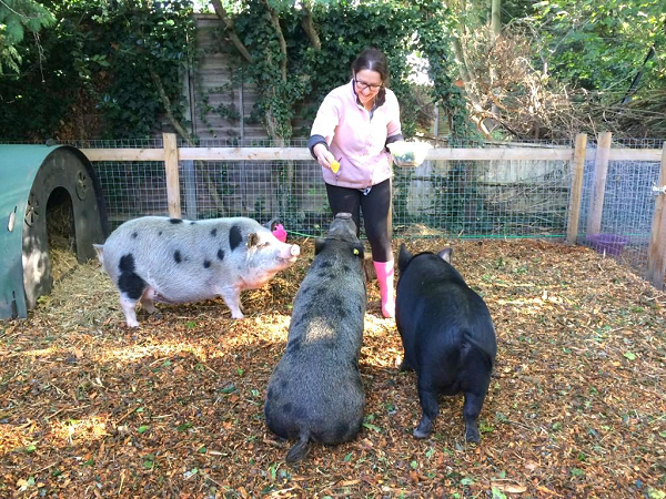 training mini pigs as part of enrichment opportunities in london