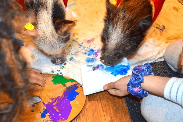 Holly and Polly the micro pigs painting
