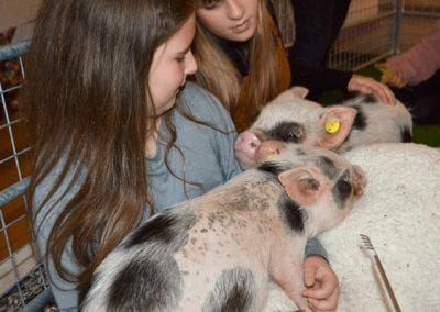 childen petting miniature pigs at aparty in london