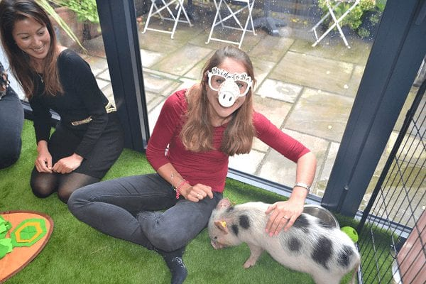 hen party with a micro pig popcorn