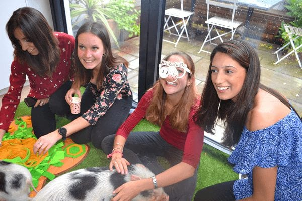 micro pig hen party in london