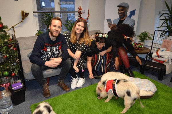 christmas business party with miniature pigs biscuit and popcorn in london
