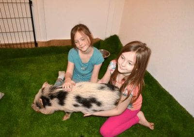 two girls cuddling a miniature pig polly during their birthday party
