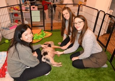 a miniature pig birthday party in london uk