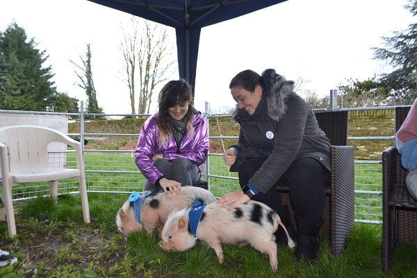 micro pig hen party near london