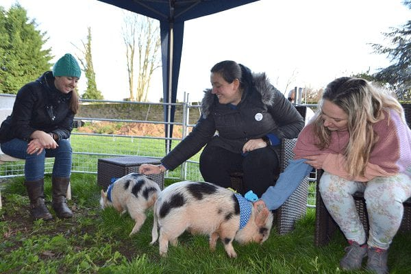 Micro Pig petting time in  london