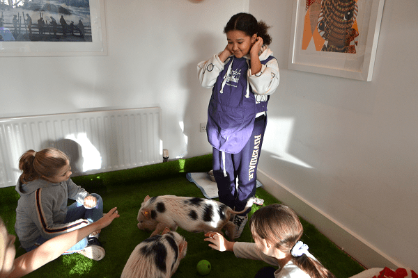 The Pigfather Team educating children about Miniature Pigs at an event in London