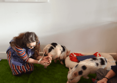 Teaching about Miniature Pigs at a London's event