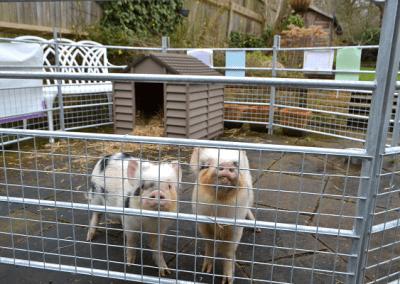 Borrow My Piggy in london