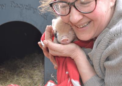 ginger spot miniature piglet uk