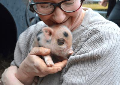 little piglet for sale near me
