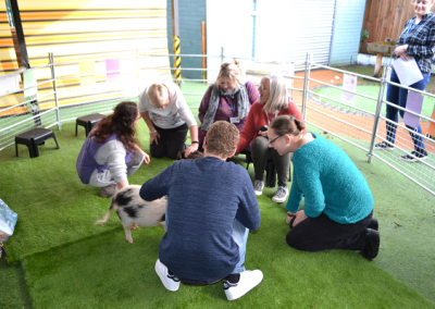 micro pigs visit to a special school in london