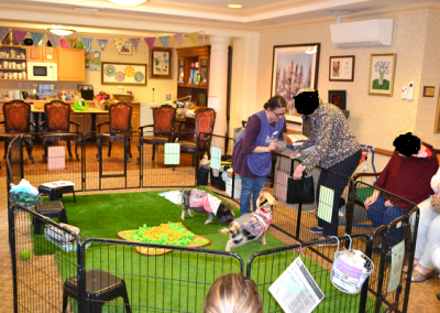 miniature pig visit to a care home in esher london