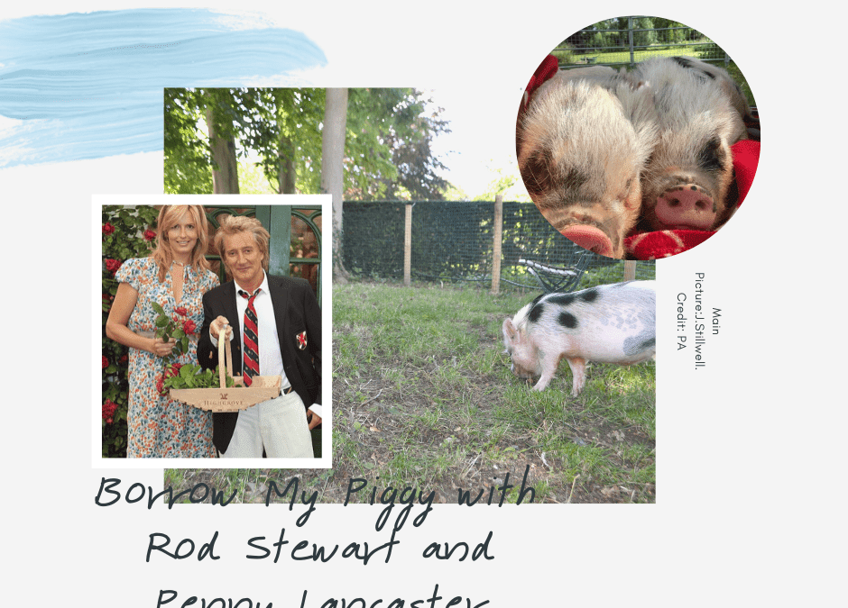 BORROW MY PIGGY WITH SIR ROD STEWART AND PENNY LANCASTER