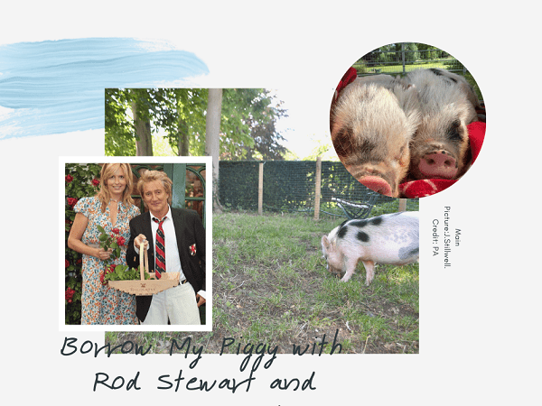 rod stewart and penny lancaster borrow our pigs