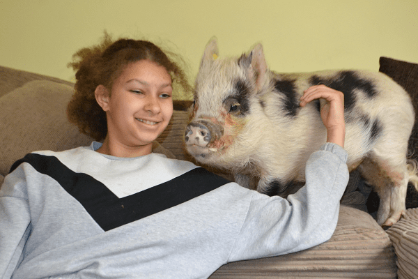 miniature pig polly with a child