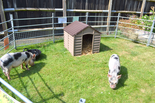 borrow a piggy experience in surrey