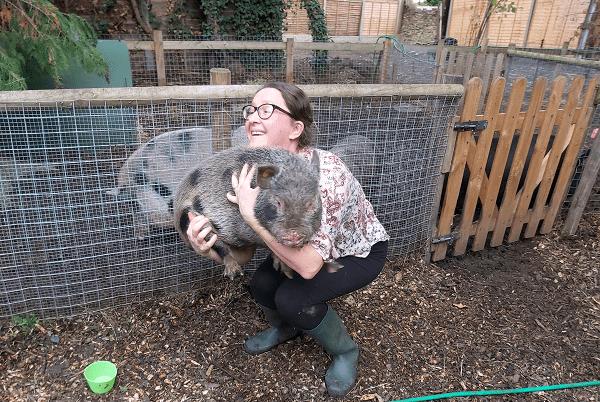 miniature pig Ollie being held by Natasha