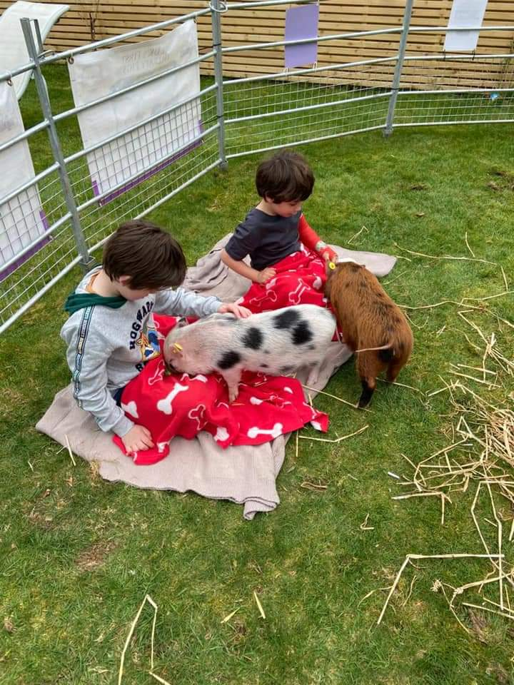 children cuddling miniature piglets at a party in Hertfordshire