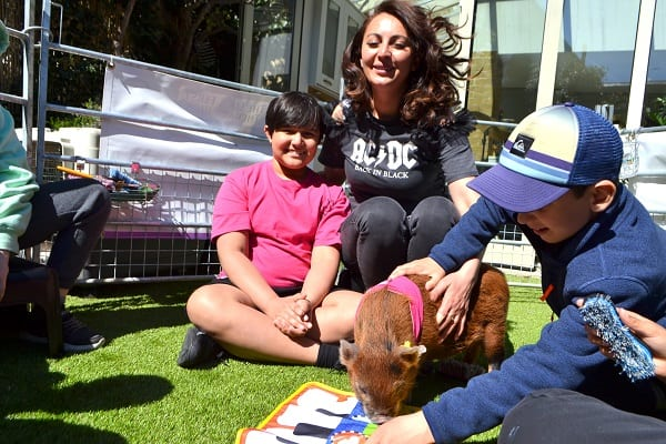 a miniature pig party with miracle and ella in london uk