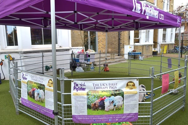 The Pigfather gazebo and pen set up during a school visit in London