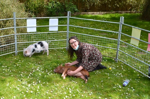 filming with miniature pigs miracle and ella in sussex