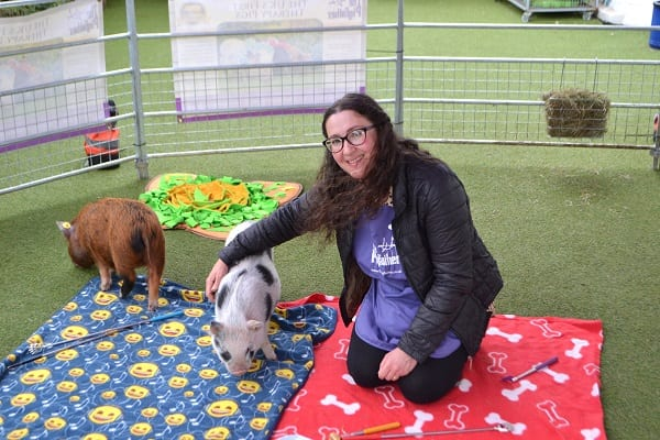miniature pigs for schools near me