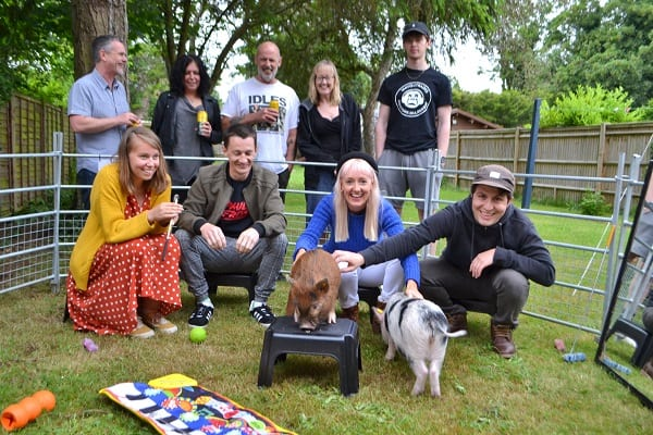 Miniature Pigs Ella and Miracle at a Birthday Party in berkshire
