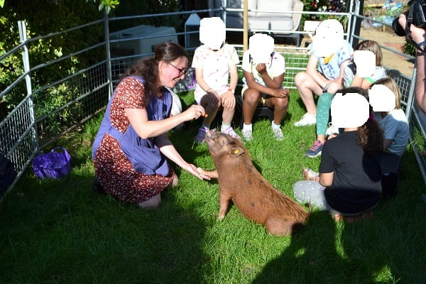 miniature pig ella showing tricks at a childrens party in london