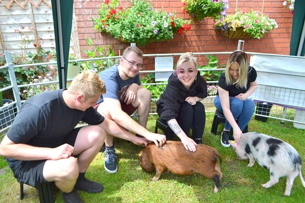 Anniversary Celebration with Micro Pigs Ella and Miracle in London UK
