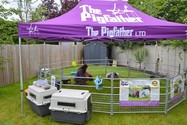 Micro pig party with Miracle and Ella in Berkshire