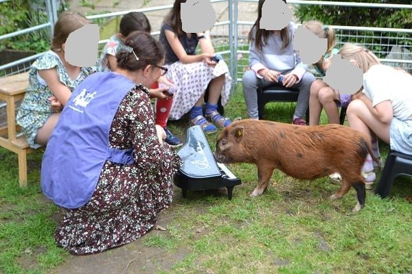 Miniature Pig Ella playing piano at a Birthday Party in London