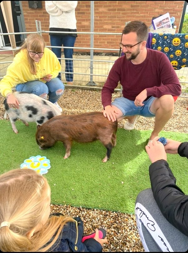 Miniature Pigs Ella and Miracle at a Birthday Party in Essex