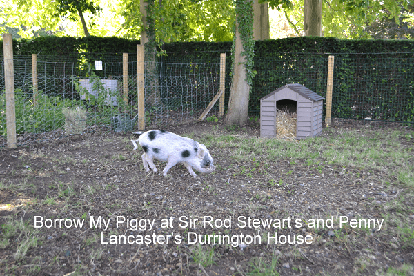 borrow my piggy at durrington house harlow