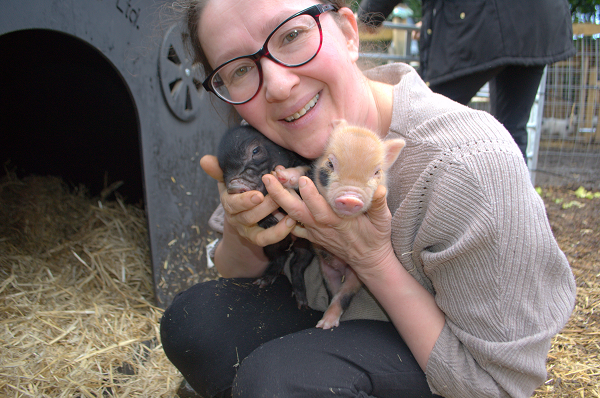 baby miniature piglets at the pigfather