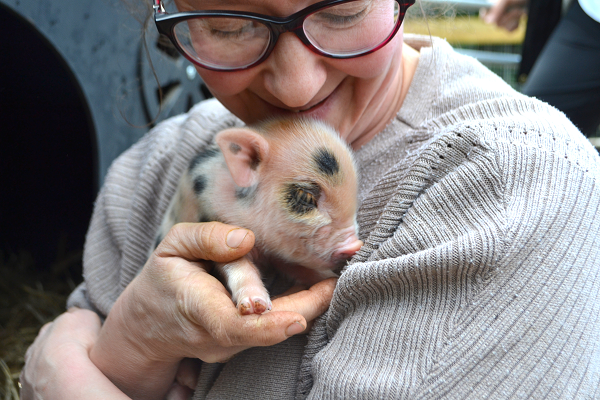 little piglet for sale near me